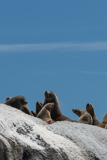 Au seals kangaroo island personal detailed page partner best travel time