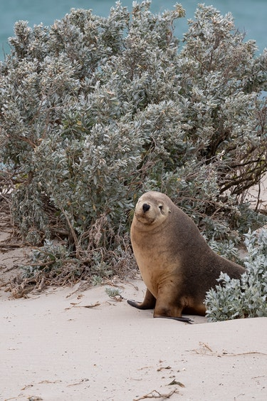 Au seal partner length of holiday header