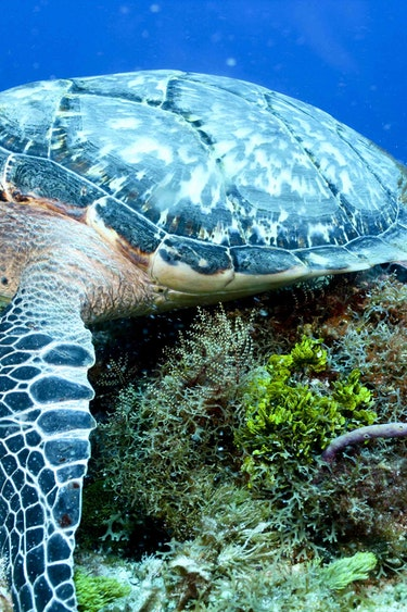 Auz coral sea dreaming