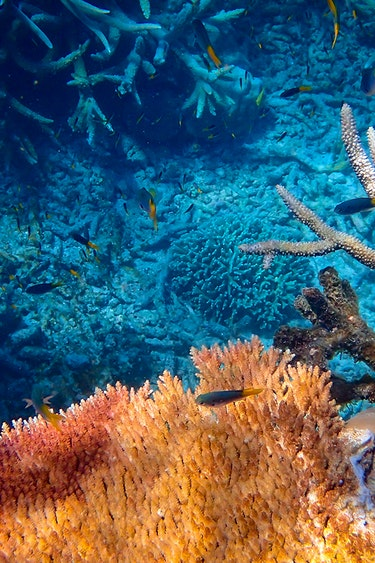 au Greet Barrier Reef best time solo