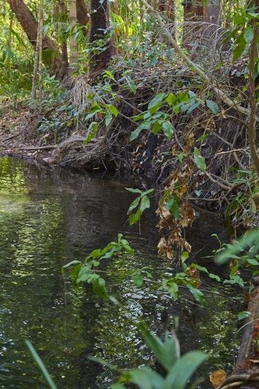 Australien Litchfield Nationalpark Schwimmen