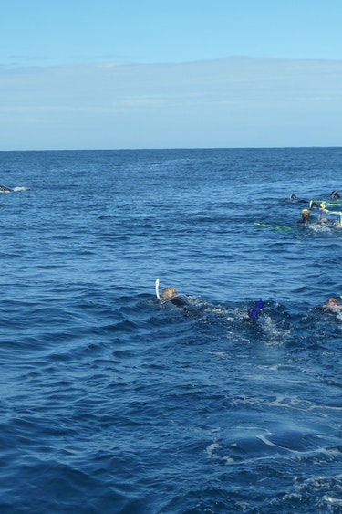 Au mooloolaba swim whales view solo see and do adventurous