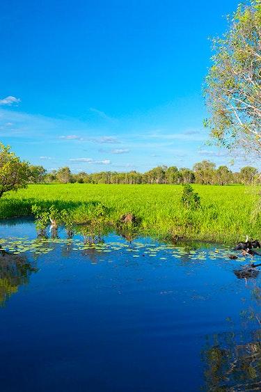Aus kakadu yellow water wildlife cruise solo easy going