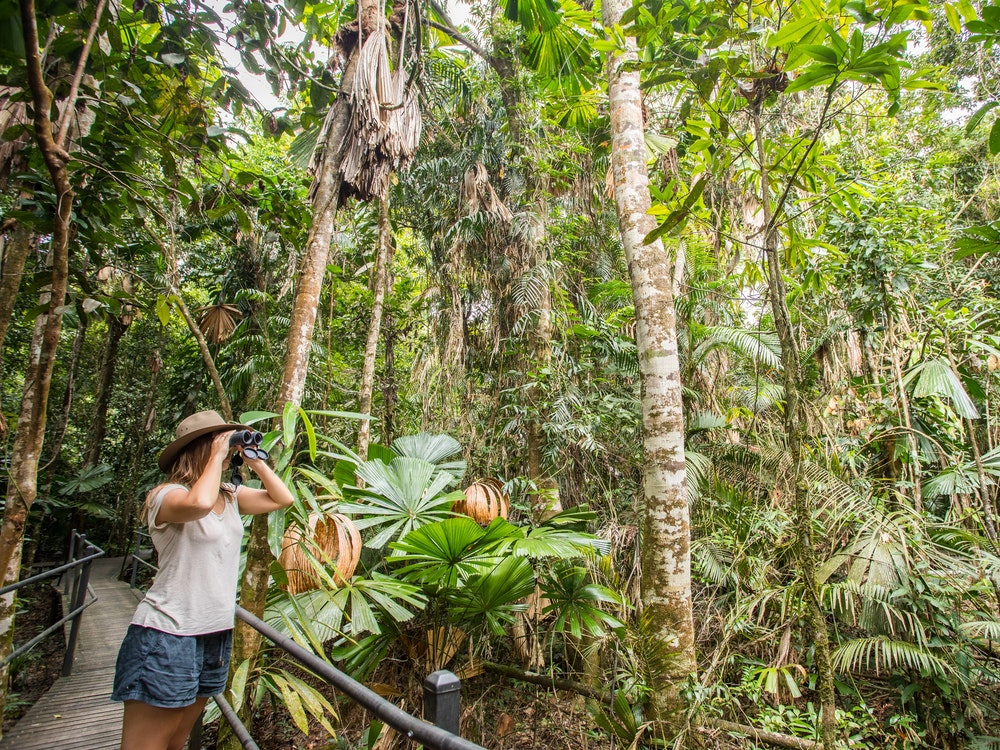 A solo traveller spotting wildlife with binoculars in the Daintree Rainforest