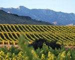 Spend your day's vineyard hopping in Marlborough