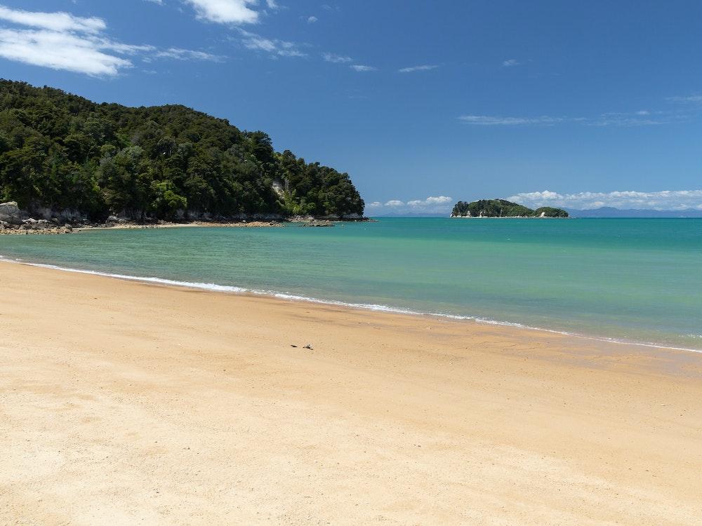 Explore the coastline and native bush of Abel Tasman with a local guide
