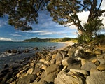 Beaches in the Coromandel | New Zealand nature