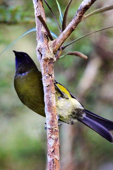 Nz fiordland national park bird barton matthews discoverpage detail best travel time