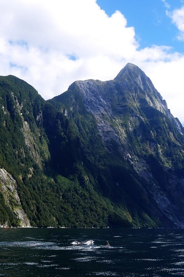 Nz fiordland national park dolphins barton matthews discoverpage detail nationalparks