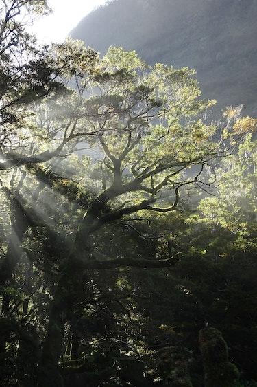 Nz fiordland national park sunlight forest barton matthews discoverpage detail regions