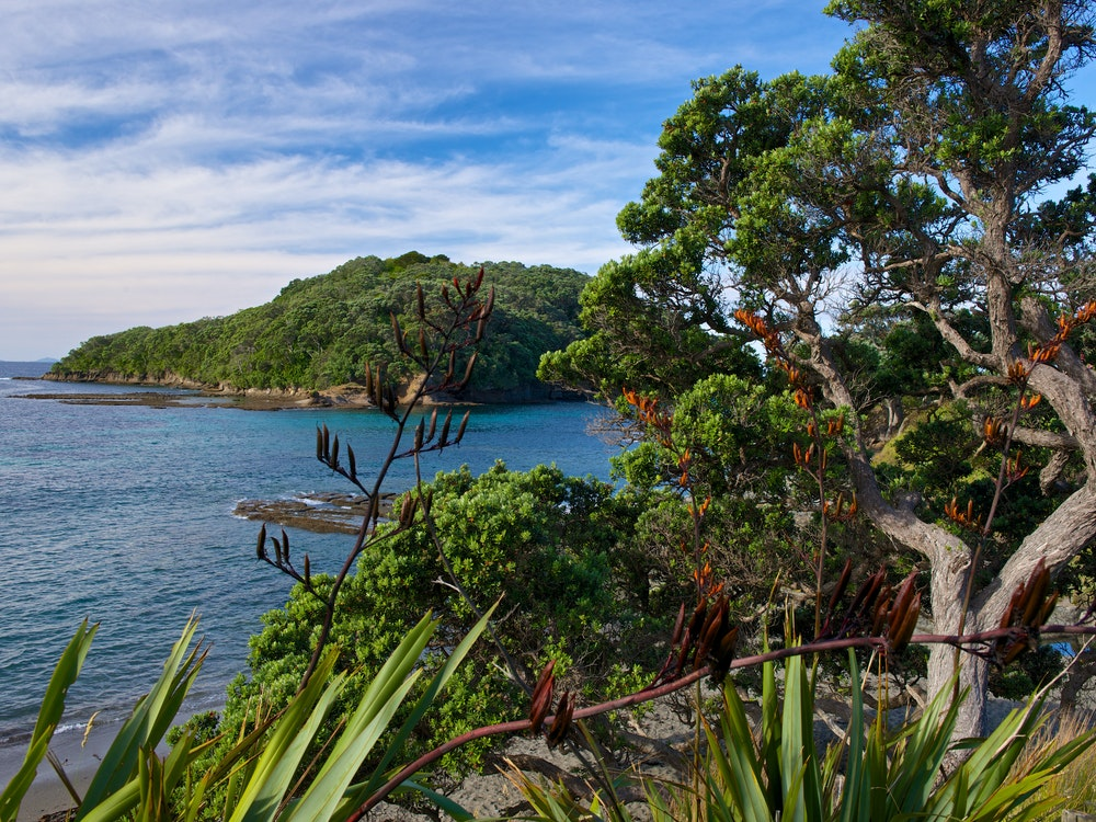 Walk the coastal trails of Mahurangi Regional Park