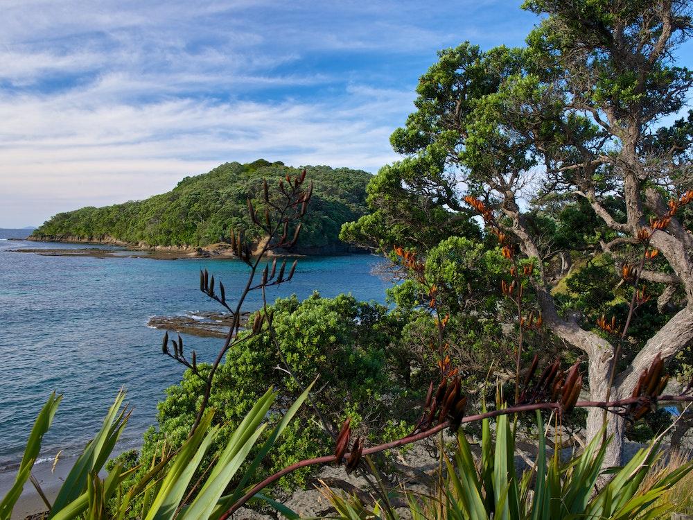Walk the coastal trails of Mahurangi Regional Park | New Zealand active holiday
