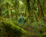 Discover beautiful forests | New Zealand nature