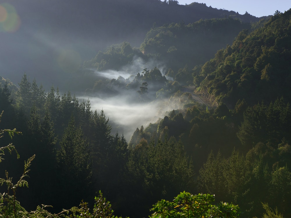 Mystical Te Urewera Rainforest | New Zealand holiday