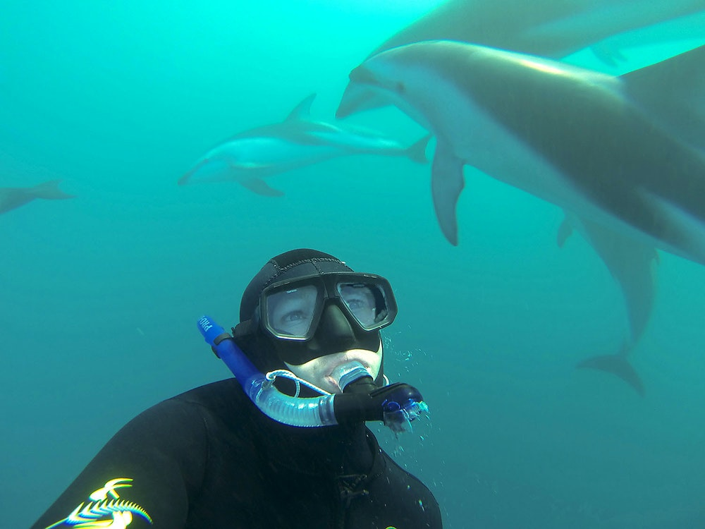 Swimming with dolphins | New Zealand wildlife