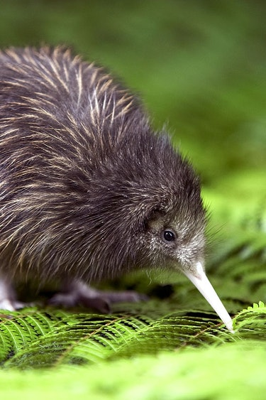 NZ - Stewart Island
