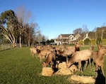 Animals in the backyard of your accommodation | New Zealand holiday