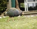 Bird spotting at Kapity Island | New Zealand holiday