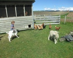 Stay in a comfortable chalet with farm animals | New Zealand holiday with kids