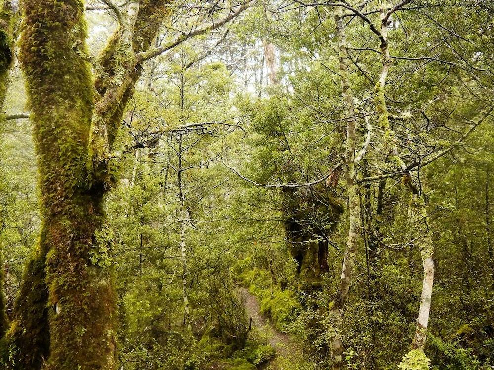 Hiking through Fiordland National Park | New Zealand active holiday