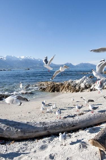 Nz kaikoura beach seagulls family best travel time
