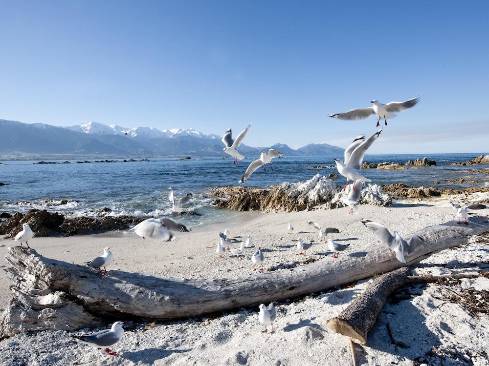Spotting birds in Kaikoura | New Zealand holiday