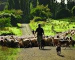 Comfortable stay at original sheep farm | New Zealand holiday