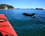 Kayaking at Cathedral Cove | New Zealand active holiday