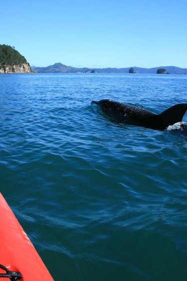 Nz cathedral cove kayak wildlife family see and do active