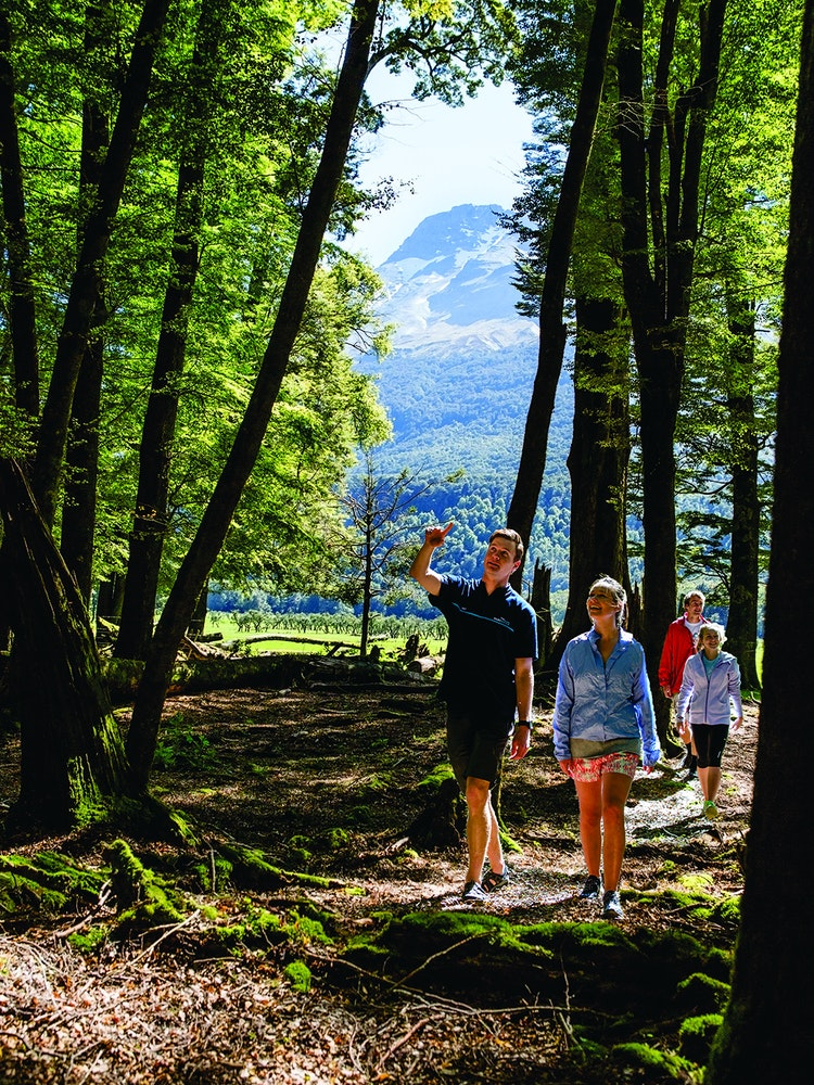 Explore the hidden gems with a local guide | New Zealand nature