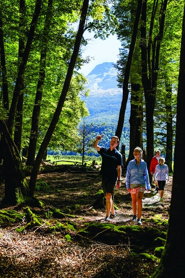 Nz glenorchy guided walk national park family see and do active