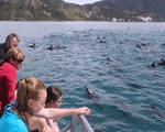 Spotting dolphins during boattrip in Kaikoura | New Zealand wildlife