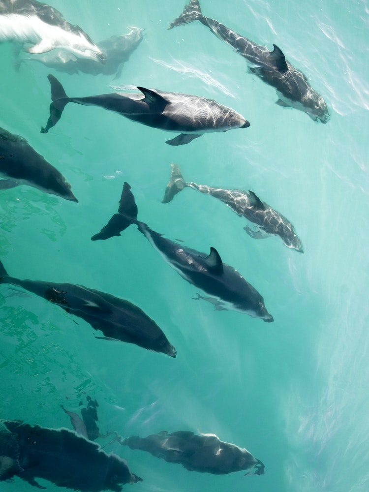 Unique encounter with dolphins | New Zealand wildlife
