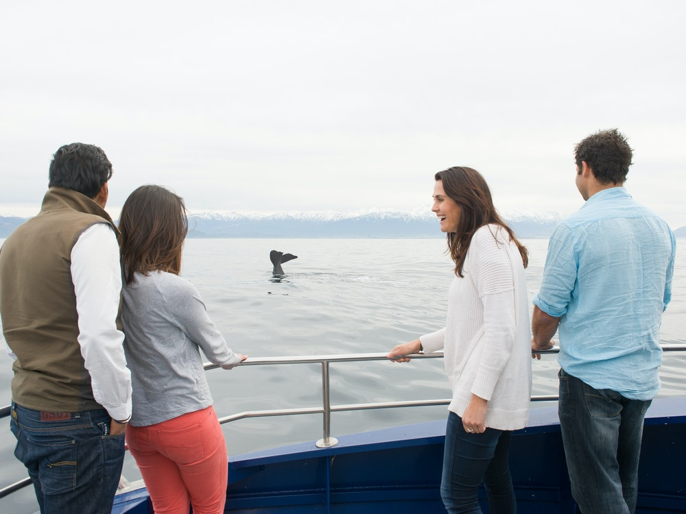 Go whale watching in Kaikoura | New Zealand holiday