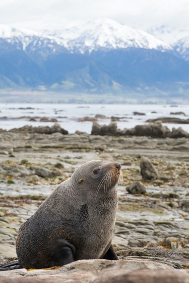 Nz kaikoura whale watching fur seal family see and do easy going