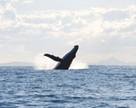 Go whale watching in Kaikoura | New Zealand wildlife