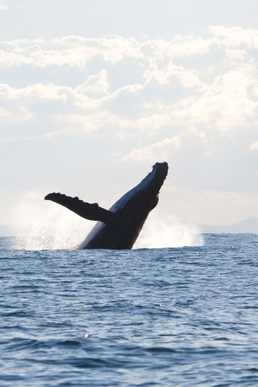Nz kaikoura whale watching jump sea family see and do easy going