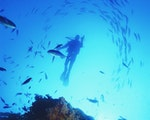 Spectacular dive to spot many fishes   New Zealand active holiday