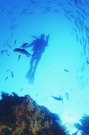 Nz poor knights islands diving fish family see and do adventurous