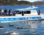Spotting wildlife on a cruise in Queen Charlotte Sound   New Zealand holiday