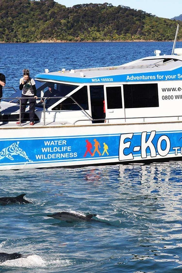 Nz queen charlotte sound wildlife cruise boat family see and do easy going