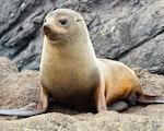 Seals in Queen Charlotte Sound   New Zealand wildlife