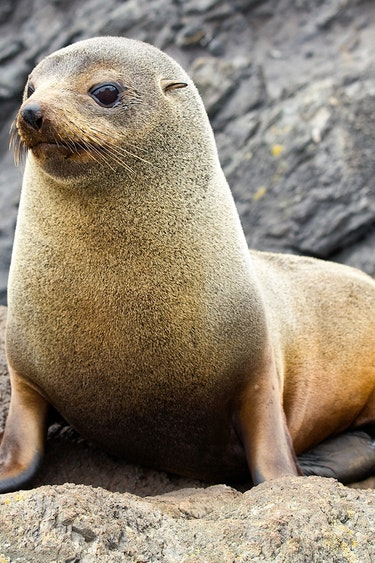 Nz queen charlotte sound wildlife cruise seal family see and do easy going