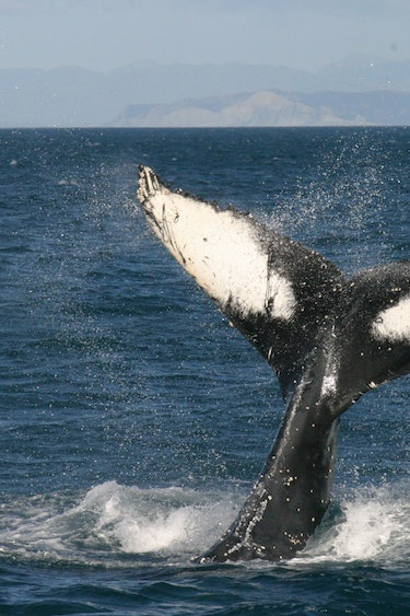 Nz queen charlotte sound wildlife cruise whale family see and do easy going