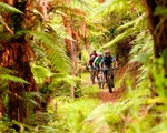Biking in the forest along the Tongariro River Trail | New Zealand holiday with kids