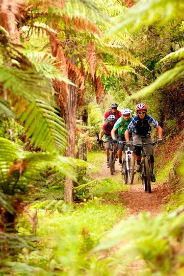 Nz tongariro river trail bike forest family see and do active