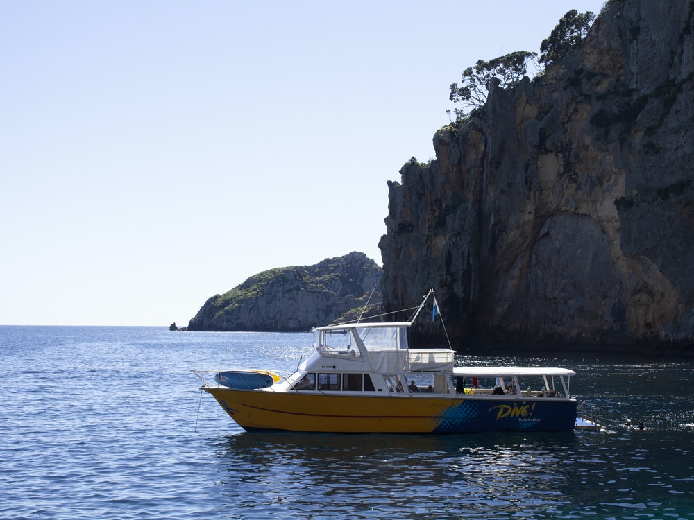 Discover the underwater world of the Poor Knights Islands | New Zealand holiday