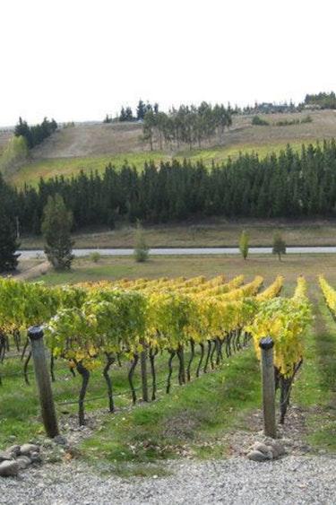 Nz fiordland vineyard garden solo very comfortable