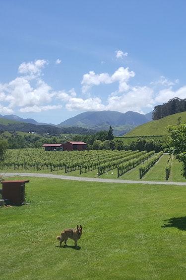 Nz kekerengu cottage vineyard view friends stays comfortable