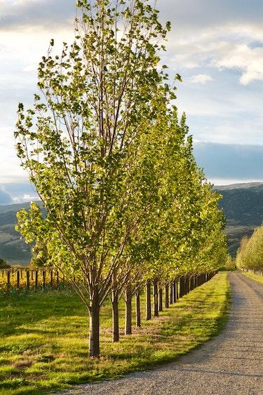 nz-central-otago-cottage-vineyard-view-partner-accommodation-comfortable
